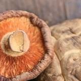 Léčivé houby - elixír zdraví s tisíciletou tradicí